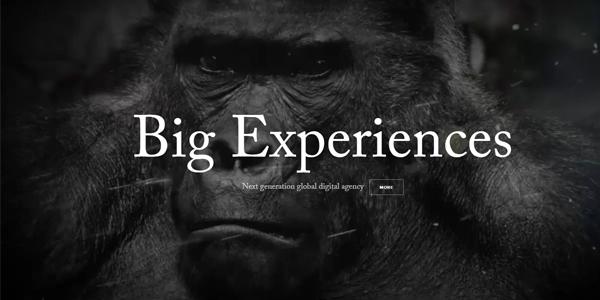 Gorila blanco y negro con título Big Experiences